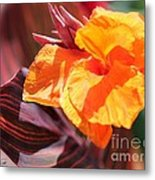 Canna Lily Named Durban Metal Print