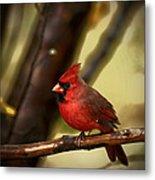 Cardinal Pose Metal Print