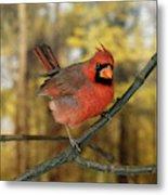Cardinal Rouge Cardinalis Cardinalis Metal Print