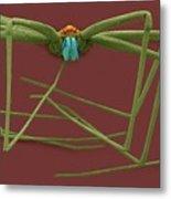 Cellar Spider (physocyclus Mexicanus) Metal Print