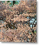 Cherry Blossoms In Pink And Brown Metal Print