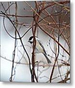 Chickadee On Woodvine Metal Print