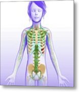 Child's Lymphatic System Metal Print