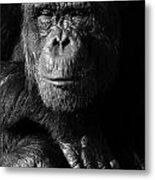 Chimpanzee Monochrome Portrait Metal Print