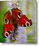 Closeup Of An European Peacock Butterfly Metal Print