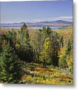 Colorful Fall Forest Near Rangeley Maine Metal Print