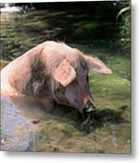 Keeping Cool Metal Print