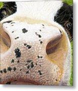 Cow No. 0651 Metal Print