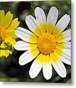 Crown Daisy Flower Metal Print by George Atsametakis