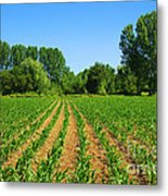 Cultivated Land Metal Print