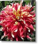 Dahlia Named Bodacious Metal Print