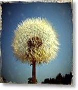 Dandelion and blue sky Metal Print