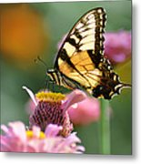Delicate Wings Metal Print by Bill Cannon
