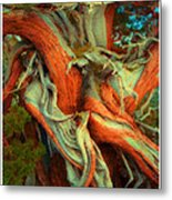 Deranged Redwood Metal Print