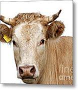 Detail Of Cow Head Metal Print