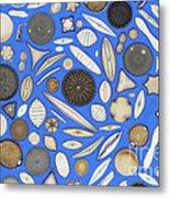 Diatoms Metal Print by Kent Wood
