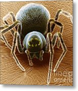 Dictynid Spider Metal Print by David M. Phillips
