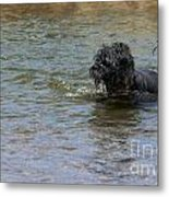 Dog Ball Water Metal Print
