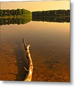 Drift Wood Metal Print