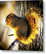 Early Morning Glow Metal Print by Optical Playground By MP Ray