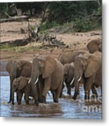 Elephants Crossing The River Metal Print