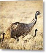 Emu Chicks Metal Print by Tim Hester