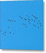 Eurasian Cranes Metal Print