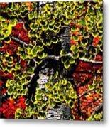 Fall Birch Leaves  Metal Print