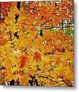 Fall Colors 2014-3 Metal Print