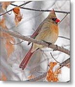 Female Cardinal In Winter Metal Print
