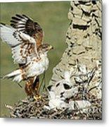 Ferruginous Hawk And Chicks Metal Print