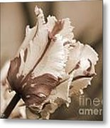 Flaming Parrot Tulip Metal Print