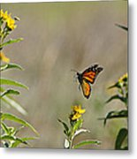 Flight Of The Monarch Metal Print by Thomas Bomstad