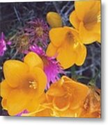 Floral Wonder Metal Print by Robert Bray