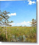 Florida Everglades Metal Print