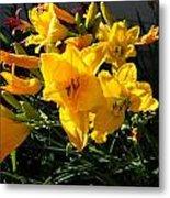 Flower In Idaho Falls Metal Print