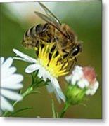 Flowering Bee Metal Print