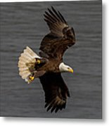Fly By  Metal Print by Glenn Lawrence