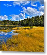Fly Pond In The Adirondacks Metal Print by David Patterson
