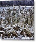 Frozen Reeds Metal Print