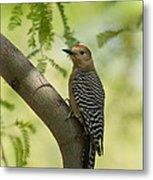 Gila Woodpecker  Metal Print