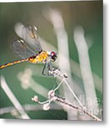 Golden Dragonfly Metal Print