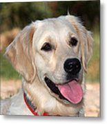 Golden Retriever Dog Metal Print