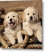 Golden Retriever Puppies Metal Print