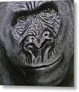 Gorilla Portrait Metal Print by David Hawkes