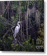 Lowcountry Marsh White Heron Metal Print