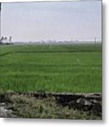 Green Fields With Birds Metal Print