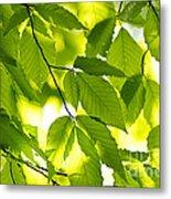 Green Spring Leaves Metal Print