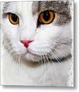 Handsome Metal Print