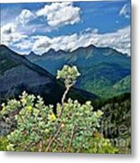Hardy Shrub Metal Print